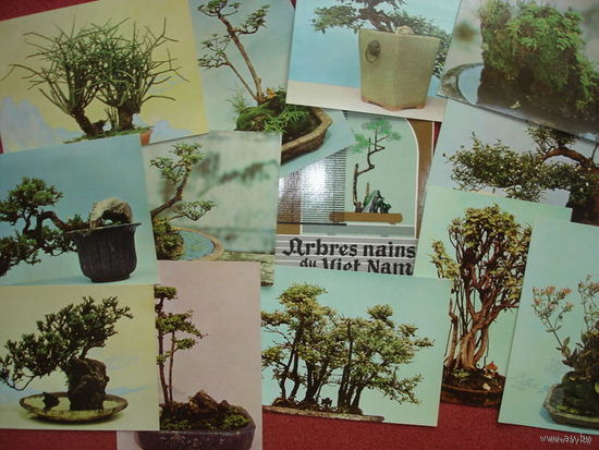 Arbres nains du Vier Nam. HANOI, VIETNAM. НАБОР ОТКРЫТОК  12шт. 1970г.