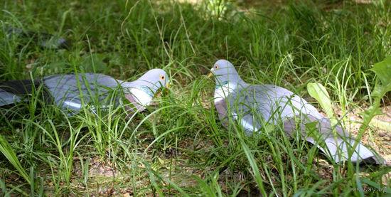 Прокат!Чучела голубей для охоты - спортпласт