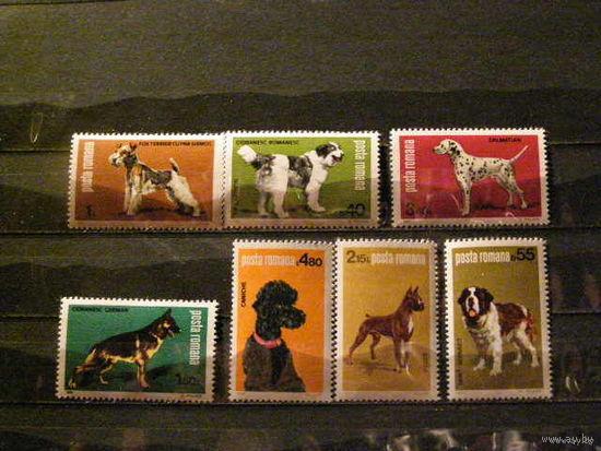 Румыния 1981 фауна Собаки**
