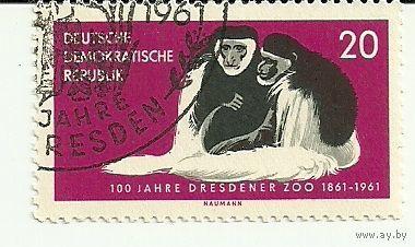 100 лет Дрезденскому зоопарку. Обезьяны. Фауна Германия