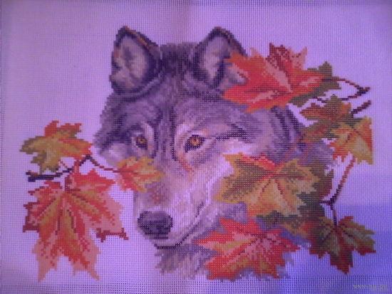 Набор для вышивки на канве. Волк