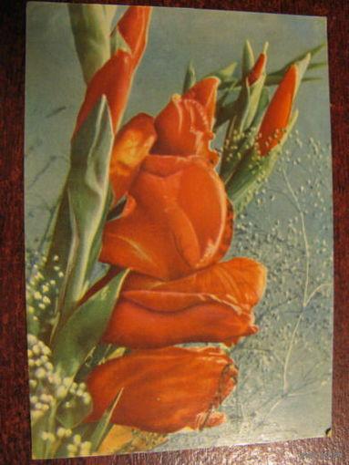 Цветы 1968г
