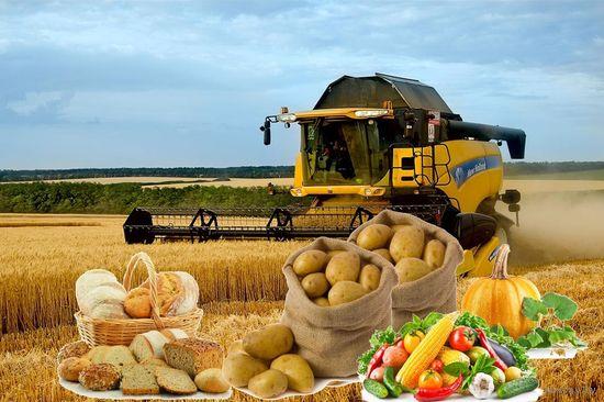 Курсовая - Рентабельность сельскохозяйственного производства и пути её повышения на примере ОАО Боровица