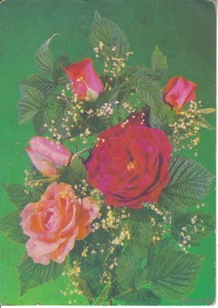 Розы. Фото И.Дергилева