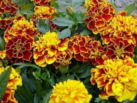 Cемена цветов и овощных культур